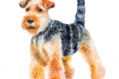 Aquarellnahaufnahmeporträt des netten Waliserterrier-Zuchthundes lokalisiert auf grünem Hintergrund. Shorthair, der Welshie-Hund aufwirft an der Hundeshow jagt. Hand gezeichnetes süßes Haupthaustier. Grußkarten-Design. Clip Art