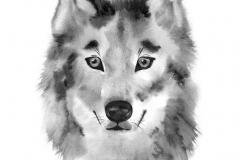 Handgemalte Aquarellillustration des Wolfs lokalisiert auf weißem Hintergrund